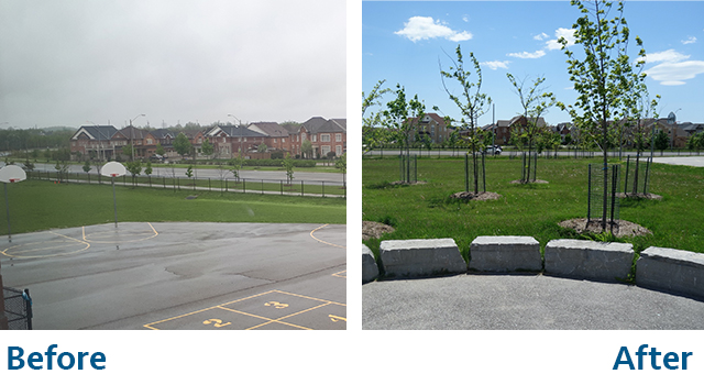Before and after of school yard - before is empty basketball court with greenspace, after is saplings planted in greenspace Evergreen 5 ways to invest in school grounds that improves outdoor play and learning