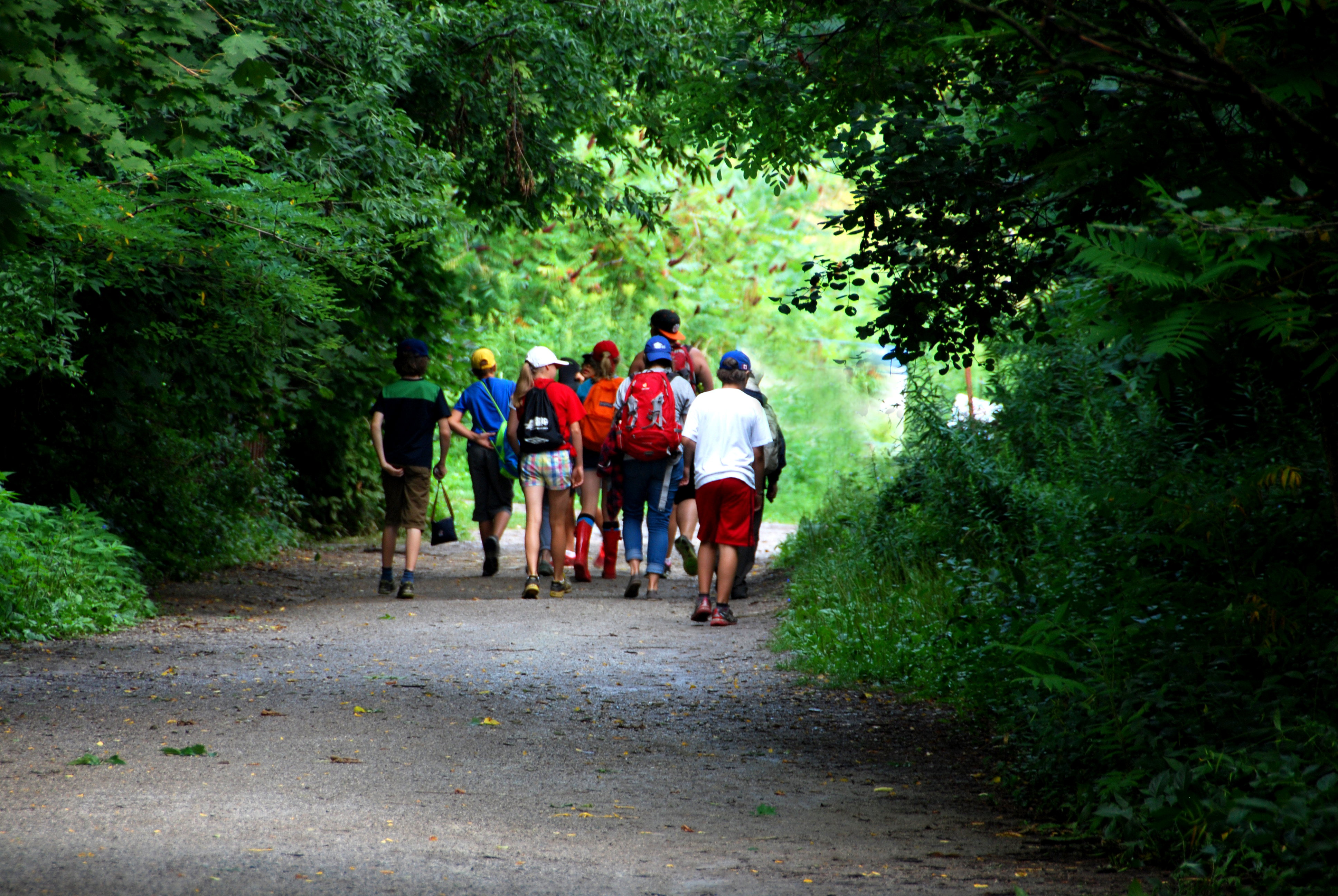 Children walking along a forested path.