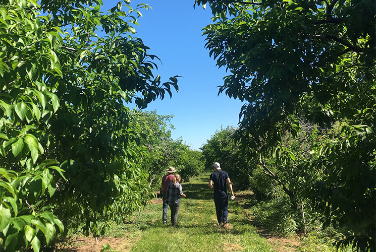 Evergreen staff walking through fields at Bizjack Farms. Image credit Kelly Chan.