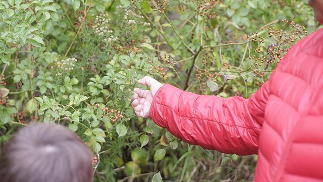 Joanne holding rosehips in a rosebush