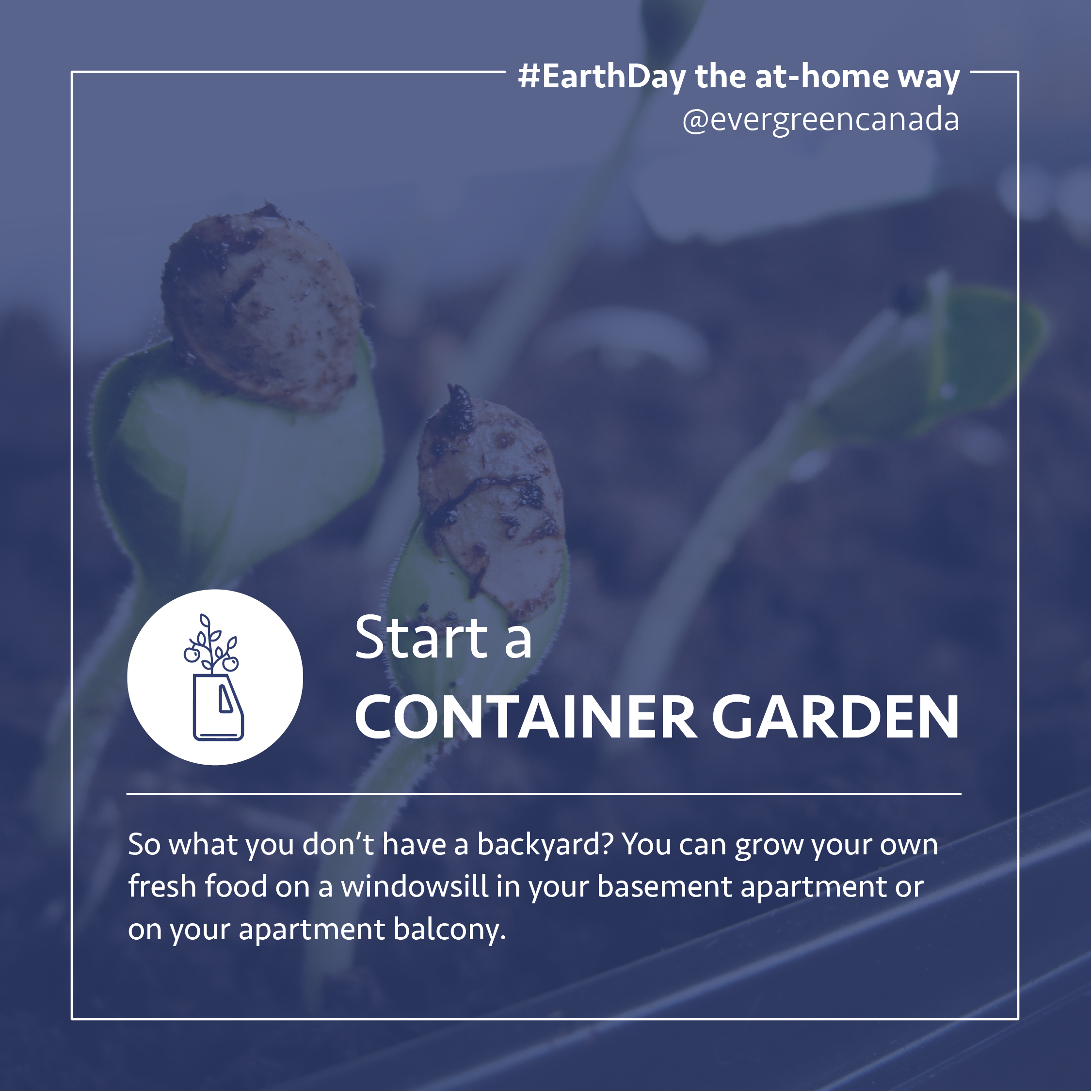 Start a container garden. So what you don't have a backyard? You can grow your own fresh food on a windowsill in your basement apartment or on your apartment balcony.