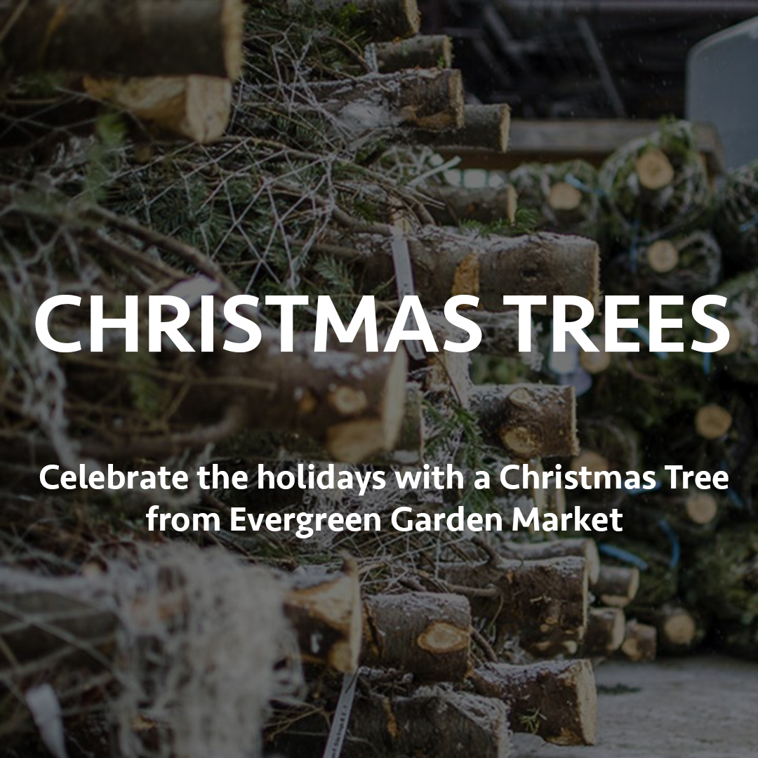 https://www.evergreen.ca/images/banners/BANNER-CHRISTMASTREES-MOBILE.jpg{description}https://www.evergreen.ca/images/banners/BANNER-CHRISTMASTREES-MOBILE.jpg