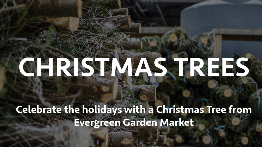 Celebrate the holidays with a Christmas Tree from Evergreen Garden Market