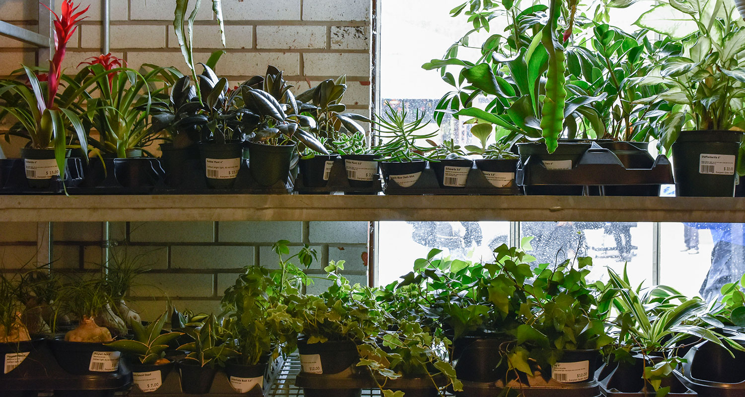Plants on sale at Evergreen Garden Market. Image: Andrea Davidova