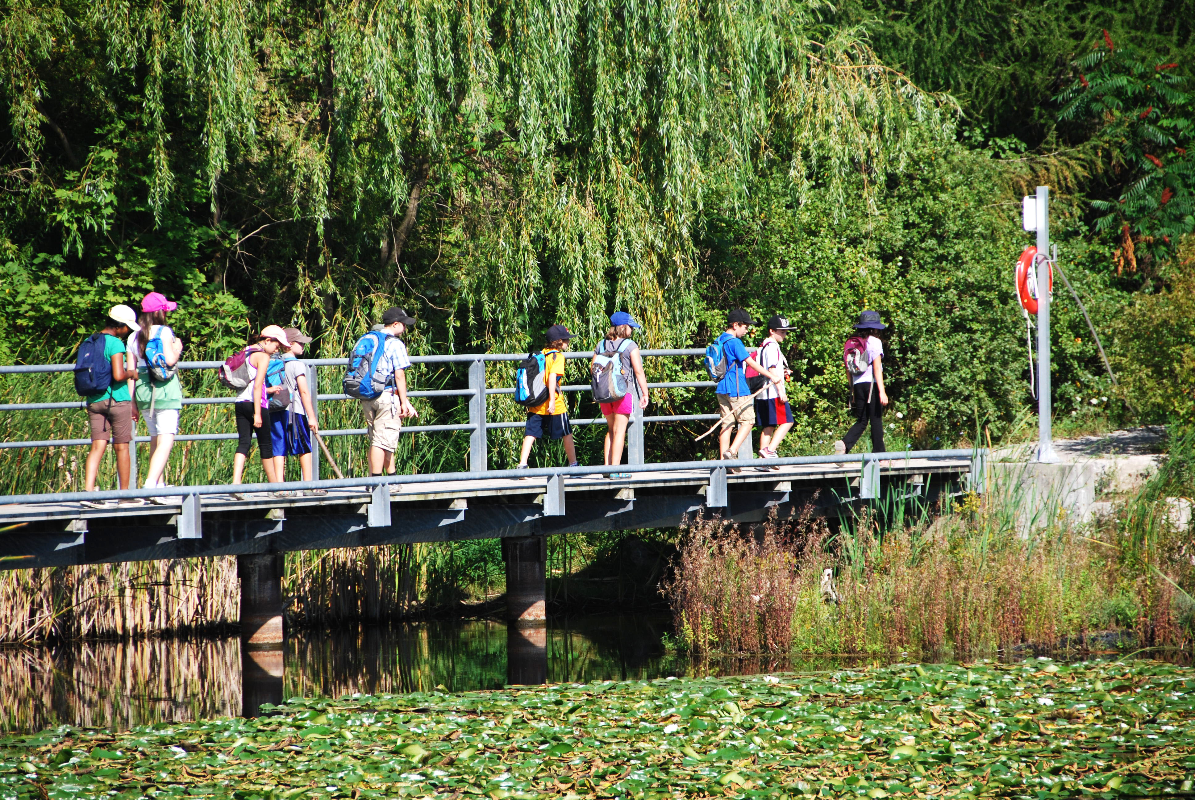A group of students with backpacks walking on the boardwalk over a lily pad pond and willow trees.