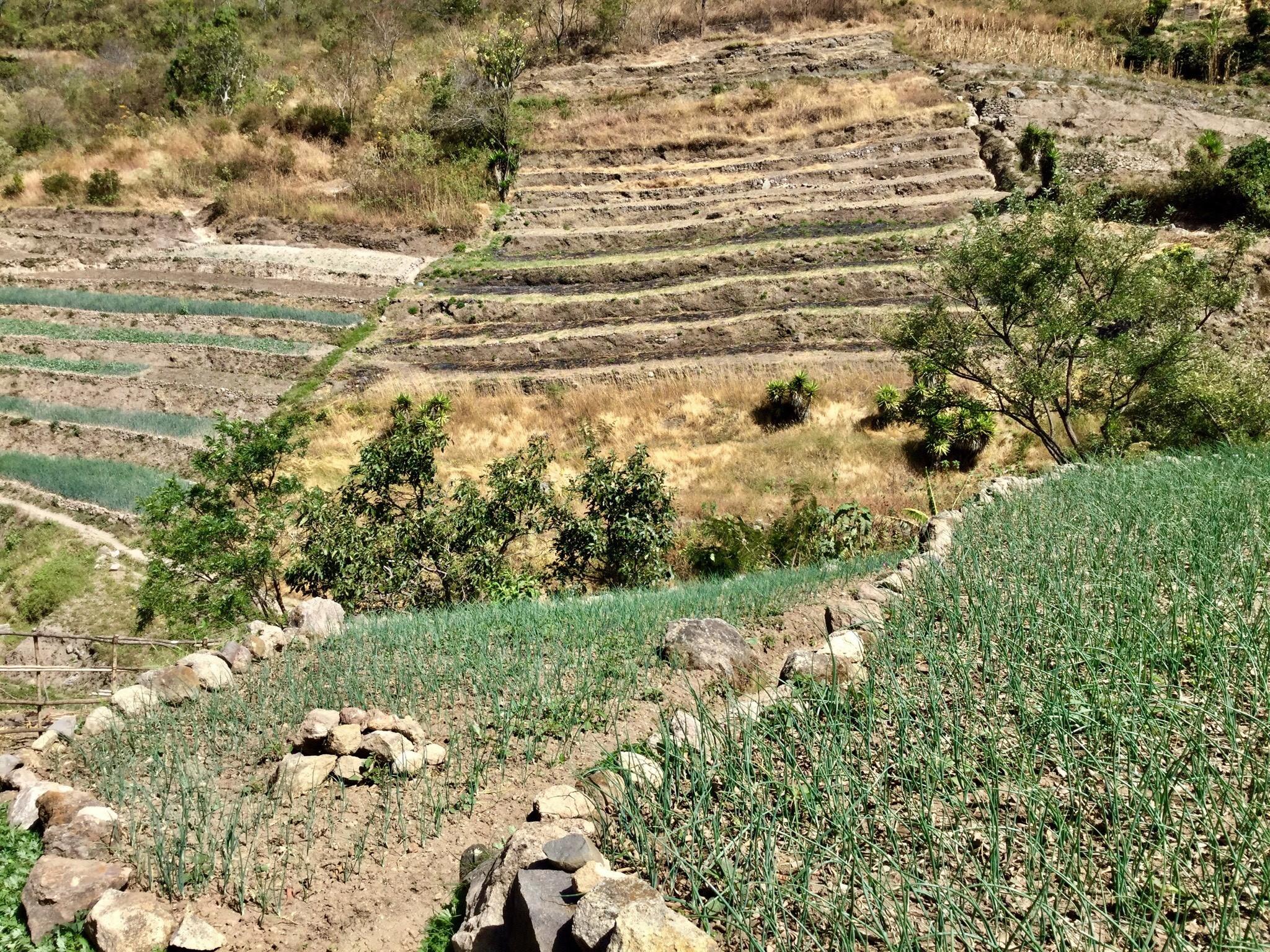 Rolling hills in Guatemala