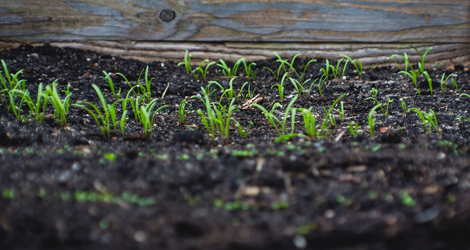 Sprouting plants coming up in a moist soil garden. Image: Markus Spiske via Unsplash