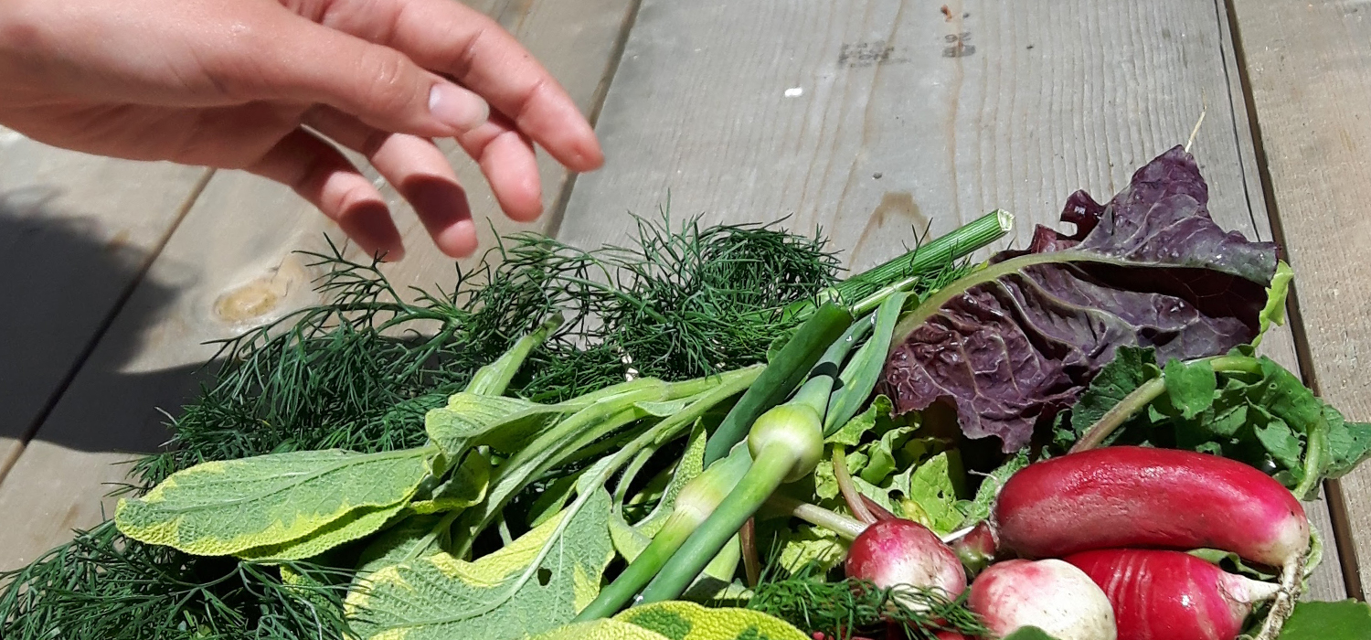 Reaching for fresh produce at Woodbine Garden