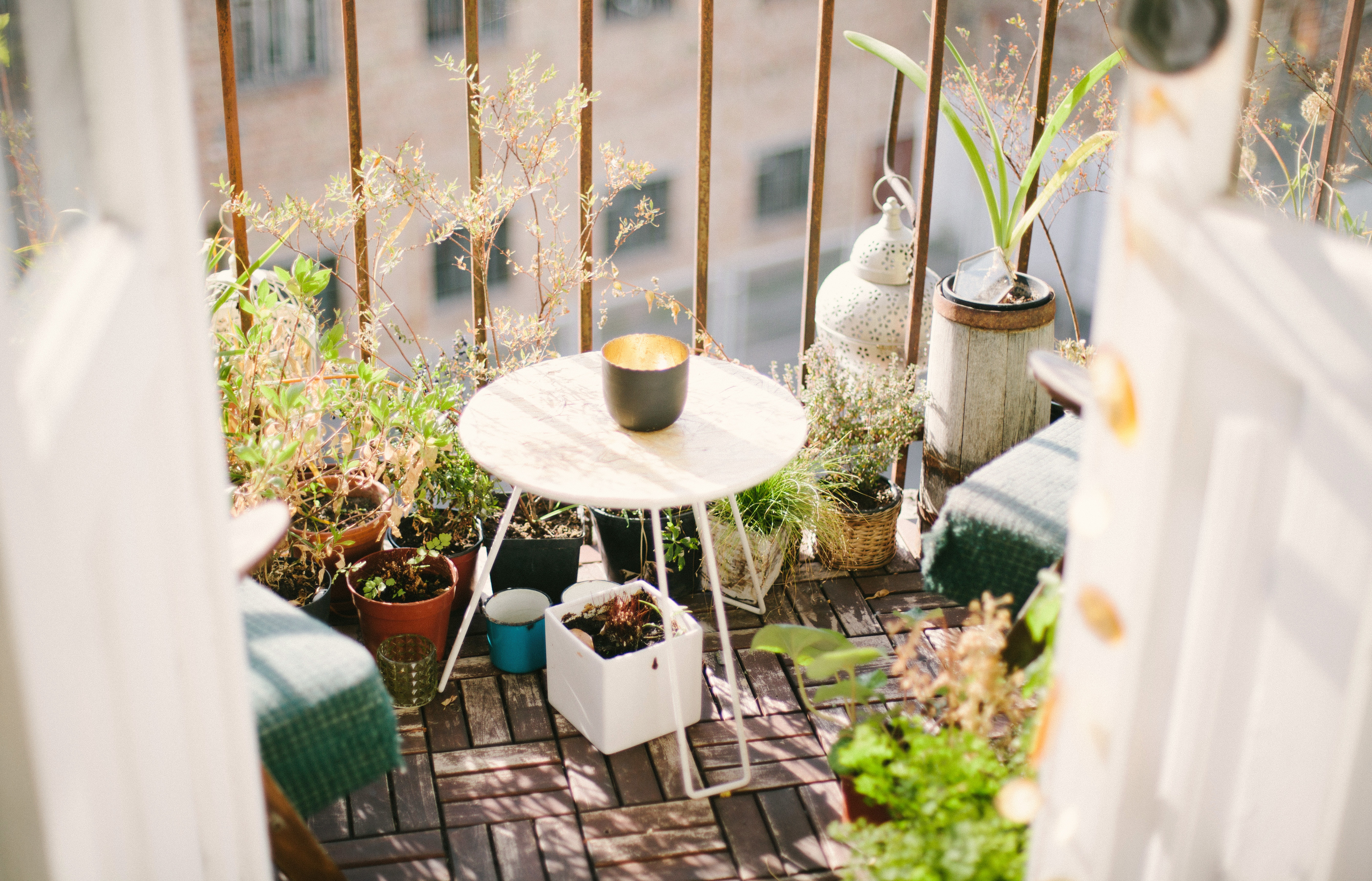 Sun-soaked plants growing on an urban balcony Image: Artur Aleksanian on Unsplash