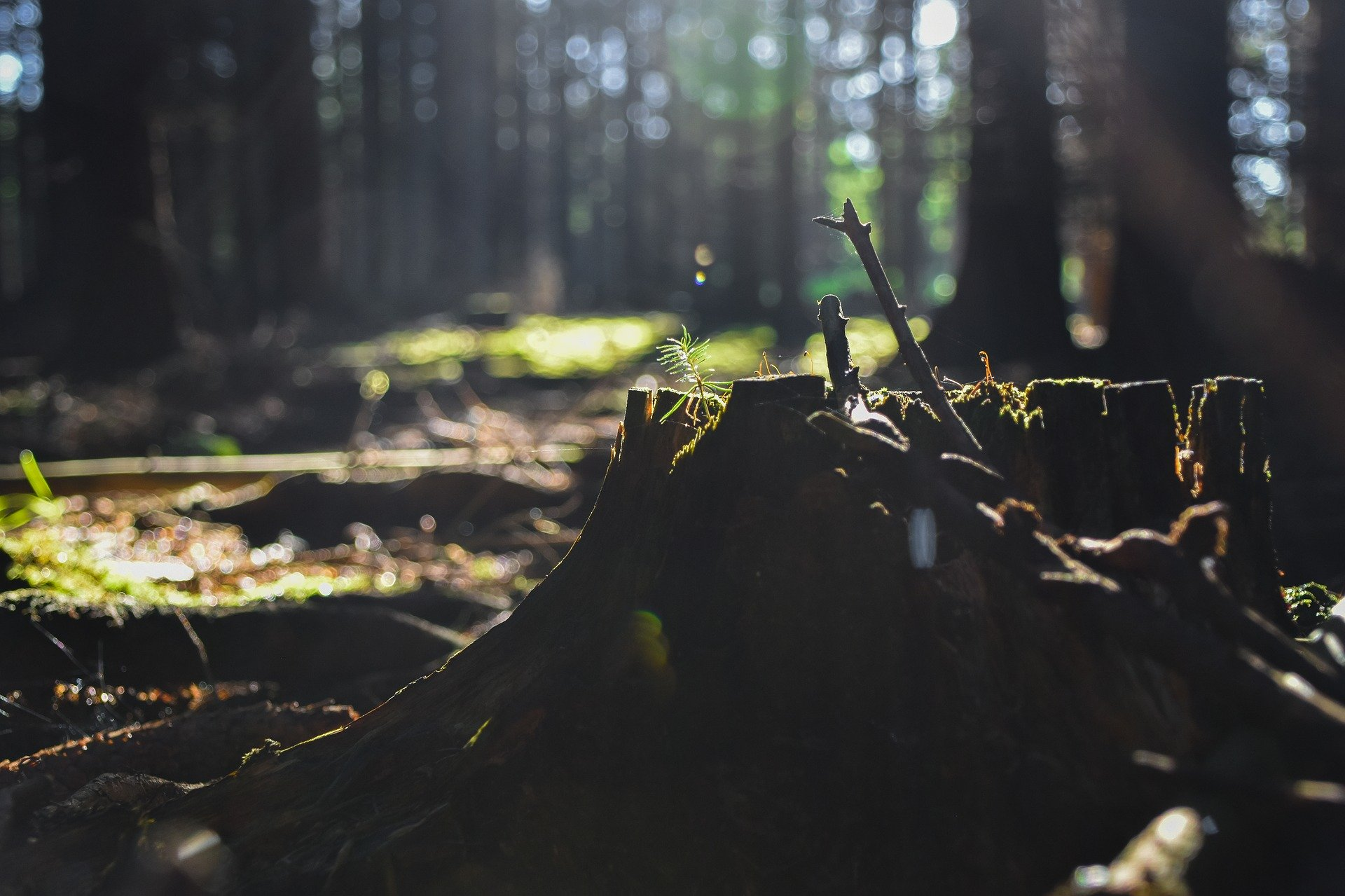 Pixabay, climate crisis, forest, stump