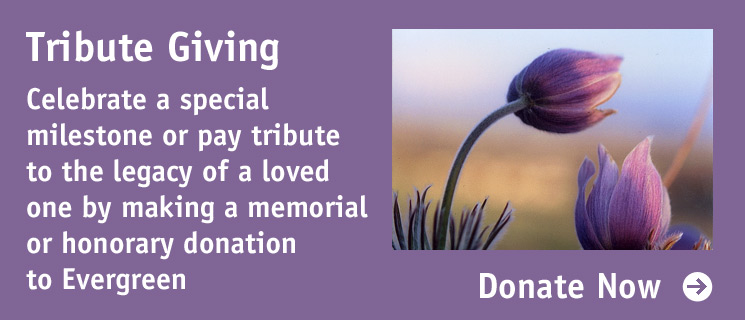 Tribute Giving: Celebrate a special milestone or pay tribute to the legacy of a loved one by making a memorial or honorary donation to Evergreen.