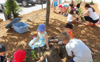 Children playing with natural elements in the shade of a tree in a schoolyard.