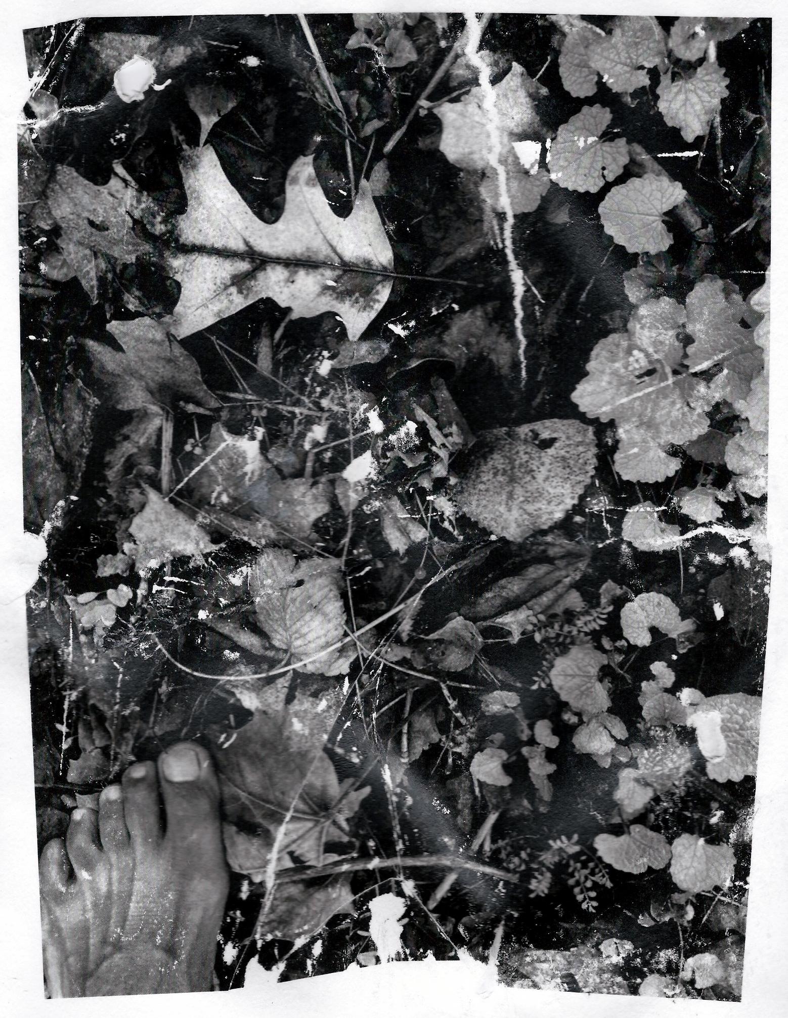 Walking The Don, 2021, photo-based gel transfer on archival paper, Sandra Brewster.