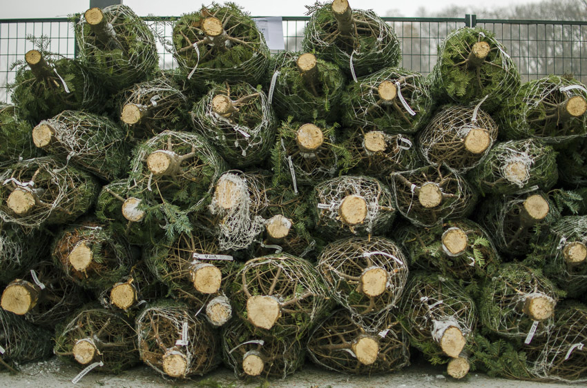 Stacked Christmas trees