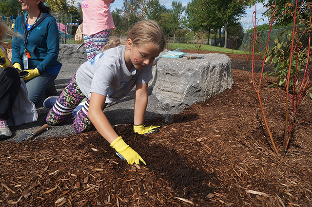 A student digs in mulch
