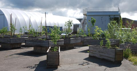 Mobile planter boxes with fruit trees at the Great Northern Way Urban Orchard