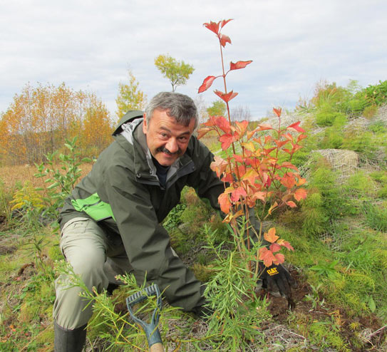 A man plants a tree. Photo: Junction Creek Stewardship Committee.