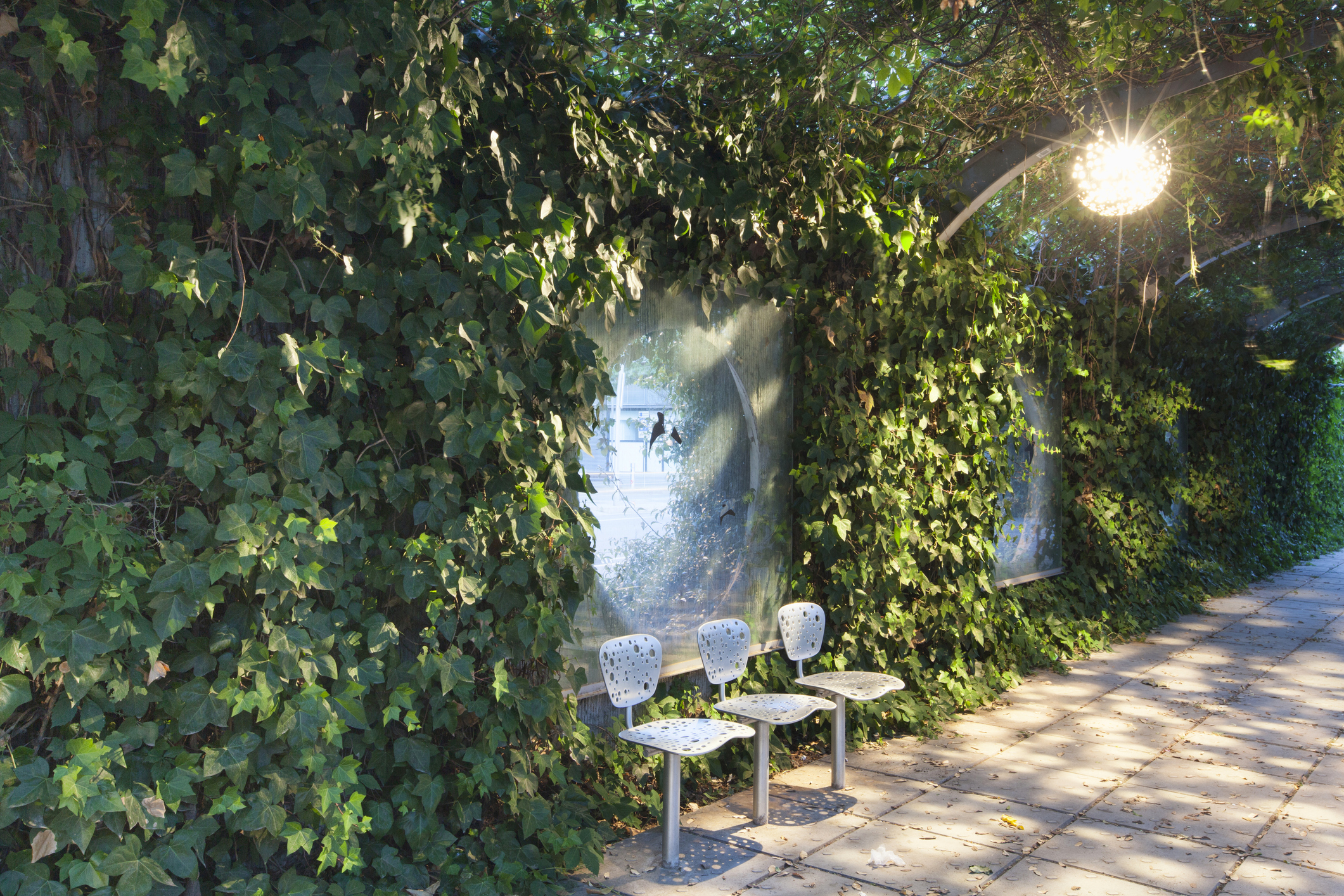 Three metal chairs sit against a wall covered in vines in Barcelona