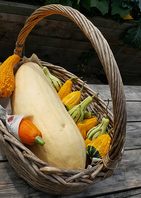 Squashes and gourds in a basket.