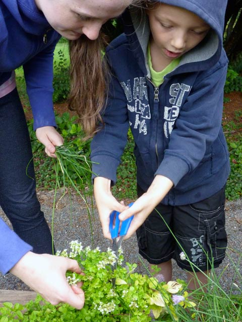 A young child harvests herbs from a garden with the help of an adult. Photo: Evergreen.