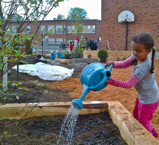 Asphalt to apple trees: École Marie-Curie in Ottawa transforms ...