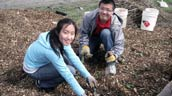 Volunteers at a planting event in Markham, ON. Photo: Evergreen.