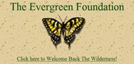 Screenshot of Evergreen's first home page.