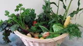 Basket of produce harvested from the Ksan House Society's garden. Photo: Ksan House Society.